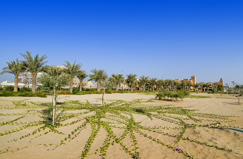 Studio Apartment For Rent in  Bloom Towers,  Jumeirah Village Circle | 14