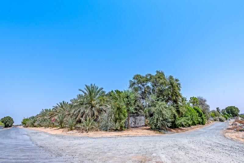 Studio Residential Plot For Sale in  Wadi Al Amardi,  Wadi Al Amardi   7
